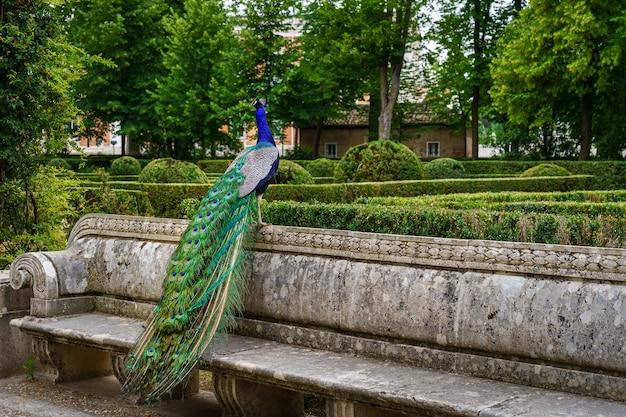 Павлин сидит на скамейке в общественном парке с пышной растительностью