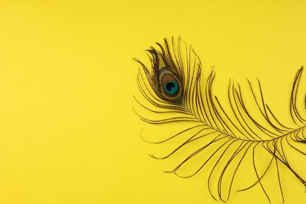 Павлинье перо на цветной бумаге