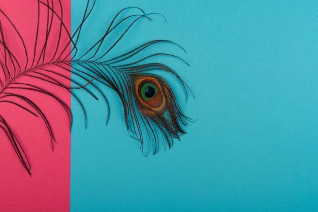 カラー紙に孔雀のプルーム