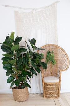 Павлин плетеное кресло из ротанга в гостиной с богемным декором и большим фикусом в соломенной кастрюле. плетеное кресло для декора интерьера.