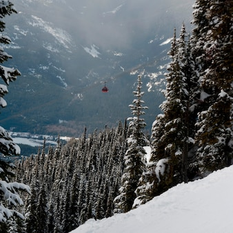 Peak 2 peak gondola over a forest, whistler, british columbia, canada