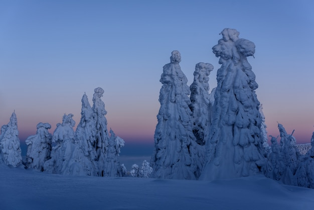 Peak of the mountain in blue hour.  peak of the mountain with snowy trees.