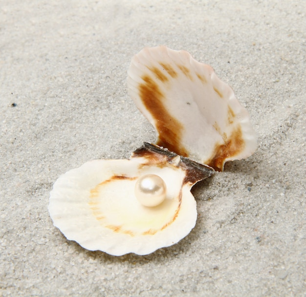 A pearl in the seashell