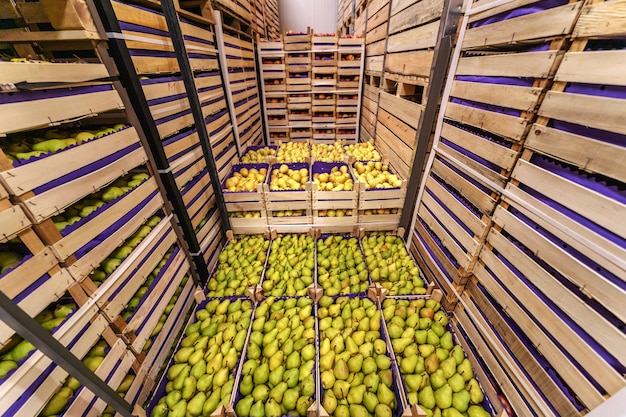 Pears in crates ready for shipping