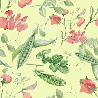 エンドウ豆の果実は花の小枝を残します。手描きベクトル水彩イラスト。