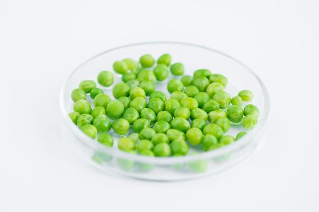 白のペトリ皿のエンドウ豆