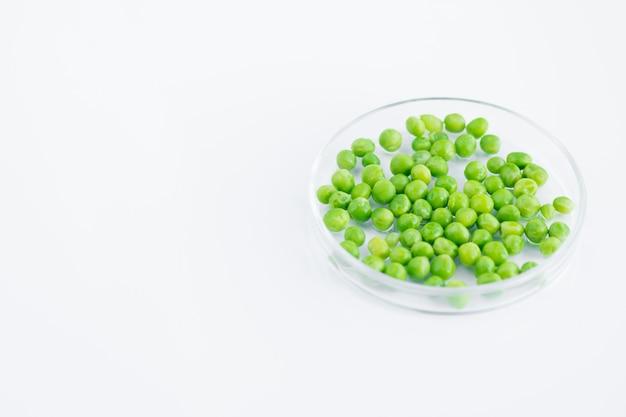 ペトリ皿のエンドウ豆
