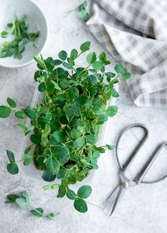 Микро зелень гороха на деревянном столе. здоровый образ жизни