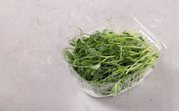 Peas microgreen is located in a plastic container on a gray background, closeup