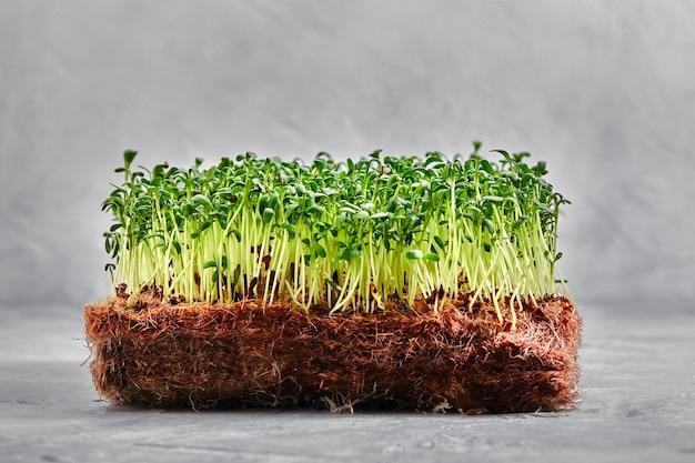 Микрозелень гороха с семенами и корнями. проращивание микрозелени на ковриках для выращивания джутовых микрозелени. проращивание микрозелени на биоразлагаемых циновках из конопли. горох проросший семена. среда для выращивания микрозелени.