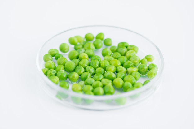Peas in petri dish on white