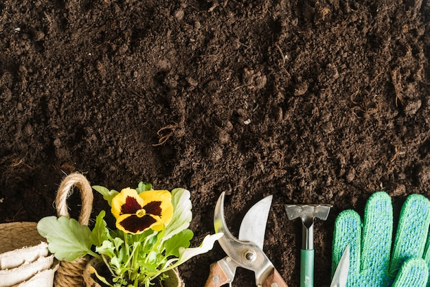 Peat pots; pansy plant; gardening tools and gloves on soil