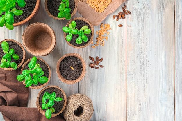 コピーするスペースのある明るい背景に苗と種を入れた泥炭鉢。栽培の概念。上面図。