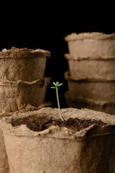 苗のクローズアップと泥炭ポット