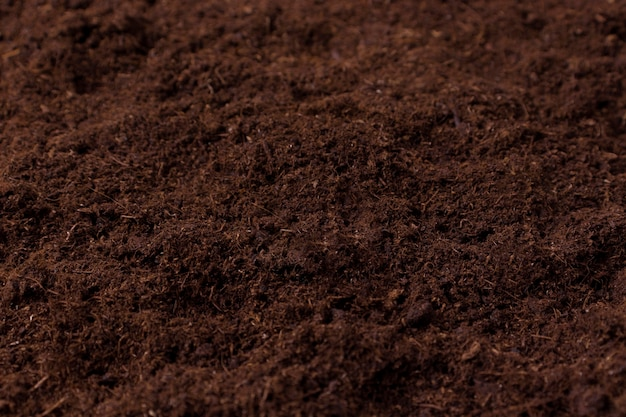 Peat soil for planting seedlings of flowers ovary closeup natural peat from the swamps selective focus