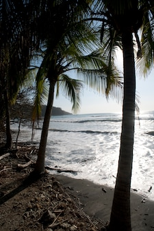 Pebble sandy beach looking over the shining ocean through palms fronds