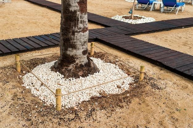 Галька вокруг дерева возле деревянных дорожек в ландшафтном дизайне