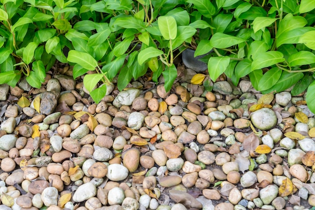 Pebbles and green leave background.