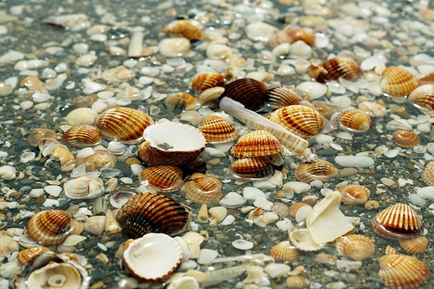 Pebbles, shellfish and snails covered in water
