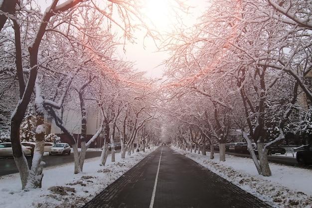 Пешеходная дорога елка зима