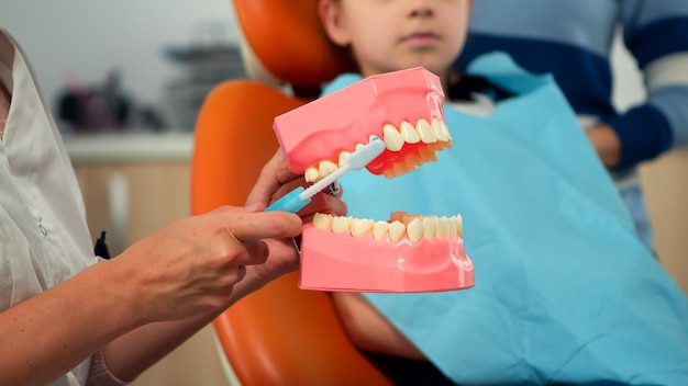 Pediatric dentist showing the correct dental hygiene using mock-up of skeleton of teeth. stomatologist doctor explaining proper dental hygiene to patient holding sample of human jaw with toothbrush.