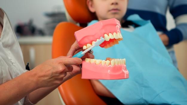 歯の骨格のモックアップを使用して正しい歯科衛生を示す小児歯科医。歯ブラシで人間の顎のサンプルを保持している患者に適切な歯科衛生を説明する口腔病学者の医師。