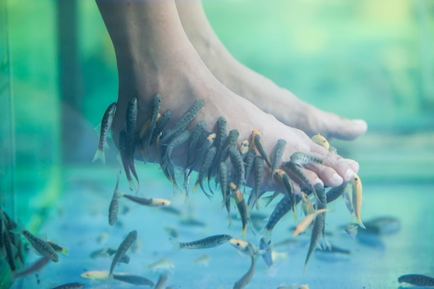 Pedicure fish spa, fish spa pedicure, rufa garra fish spa pedicure massage treatment, closeup of feet and fish in water.