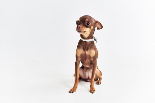 人間のクローズアップスタジオの血統の犬の友人