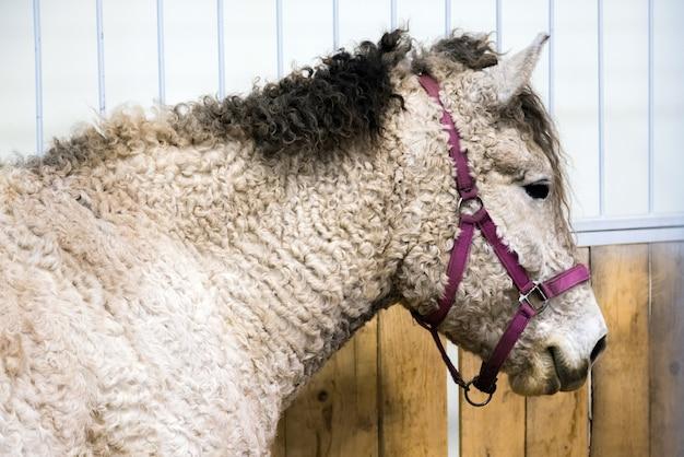 Породная белая лошадь в конюшне. лошади в вольере.