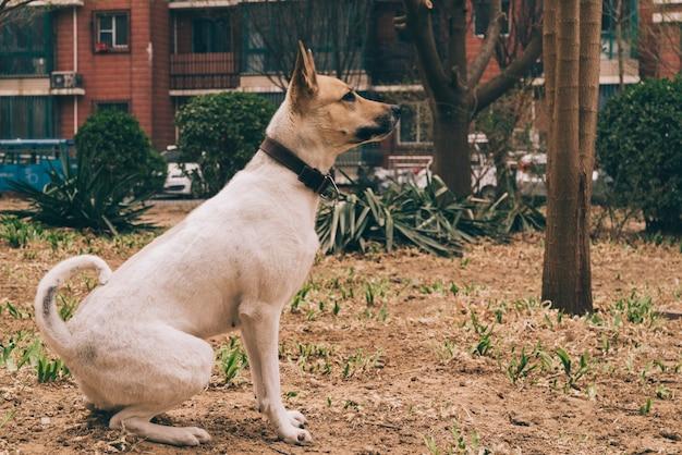 Pedigreed dog on walk in city