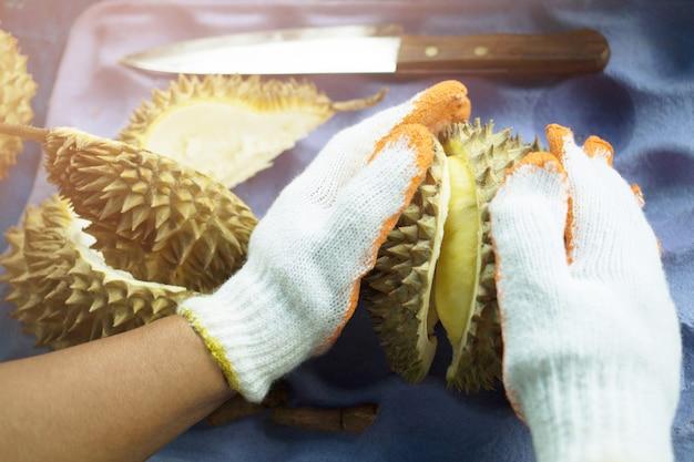 熟したドリアンの果実を手に、クローズ アップの手でドリアンの果実をはがします。