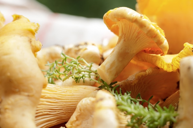 Peeled forest fresh edible mushrooms are ready for cooking. organic fresh chanterelle on a cutting board