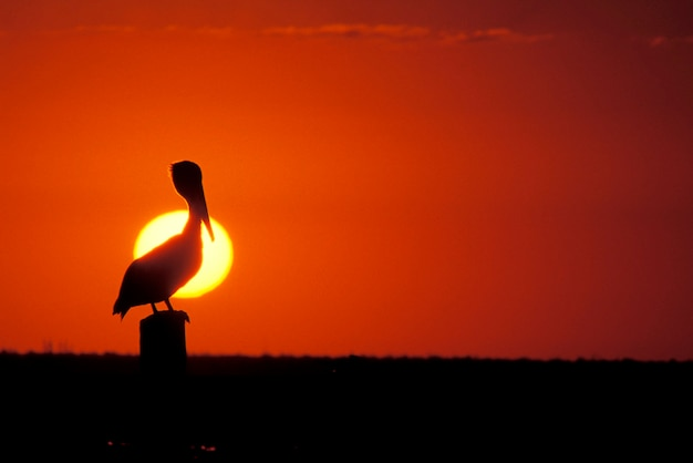 Pelican perching on post, mexico