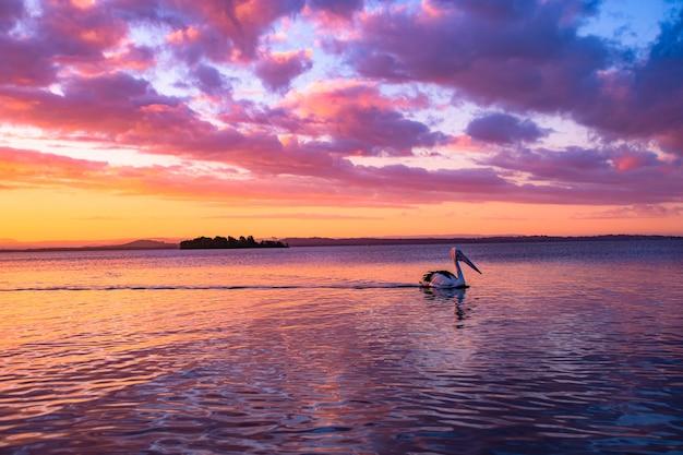 夕焼けの黄金の曇り空の下で湖で泳ぐペリカン