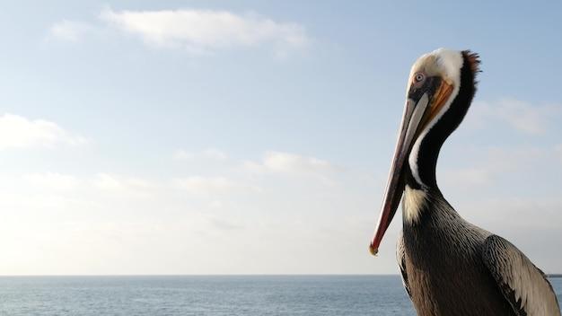 Pelican and white snowy egret, heron on wooden pier railings, oceanside boardwalk, california usa. ocean sea beach. close up of coastal bird, seascape and blue sky. funny animal behavior portrait.