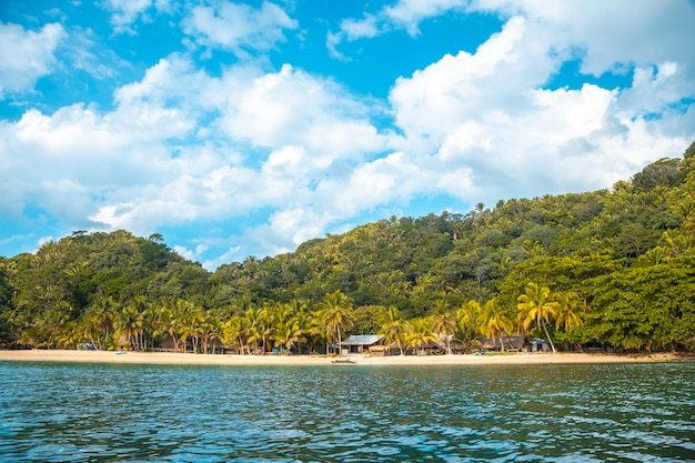 Pelicans in punta de sal in the caribbean sea, tela. honduras