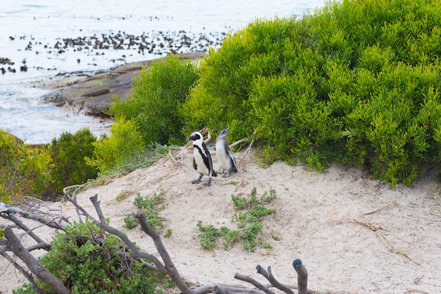 Penguin colony on a beach
