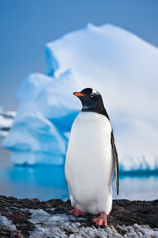 Penguin on the rocks