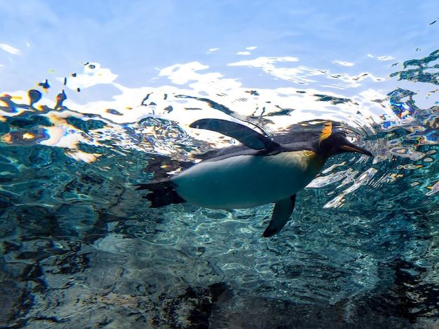 빛 플레어, 살아있는 동물과 함께 맑은 수중 수영 펭귄