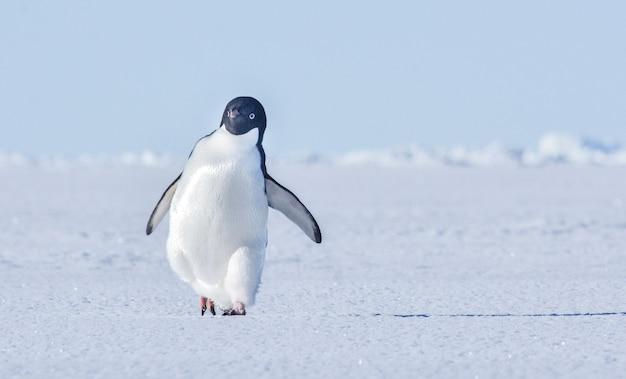 自然の背景を持つ凍った海の上を歩くペンギン