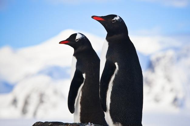 Пингвины мечтают о скале