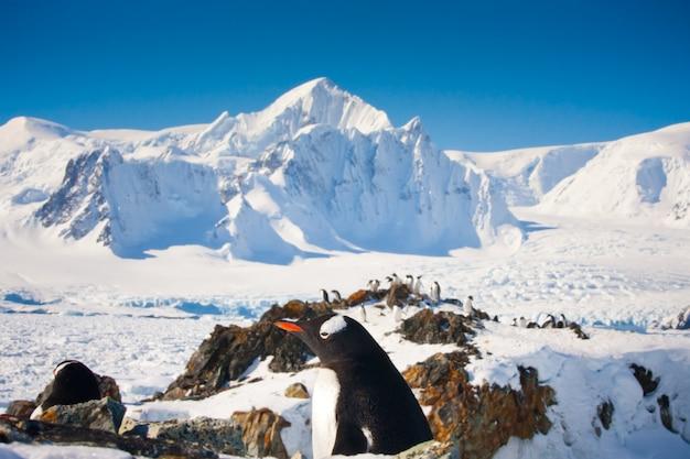 남극 대륙의 펭귄
