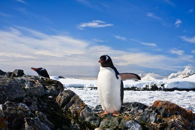 Гнездо пингвинов в антарктиде. концепция природы