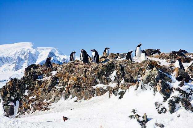 Пингвины на скале