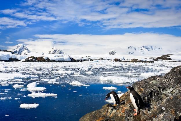Пингвины на каменном берегу