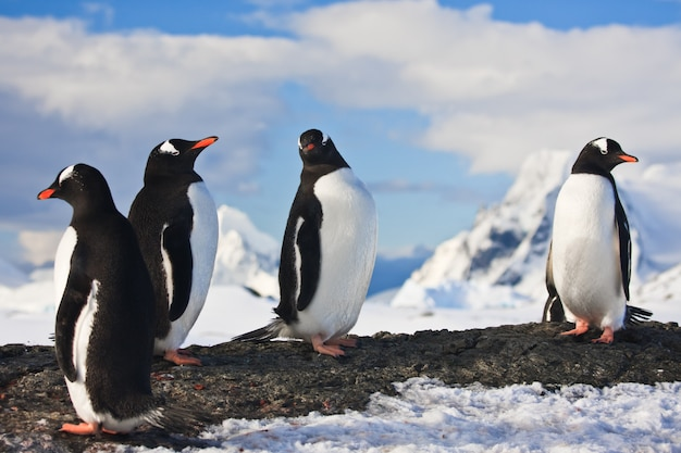 Penguins on a rock in antarctica