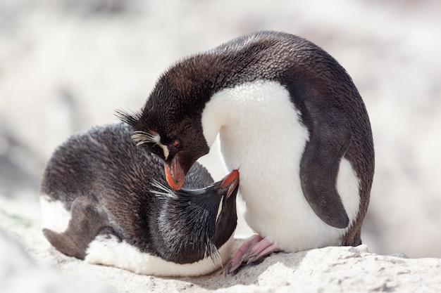 岩の多いビーチに座っているペンギン