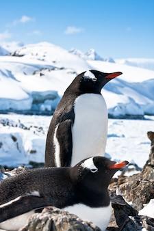 Penguins in snowy landscape