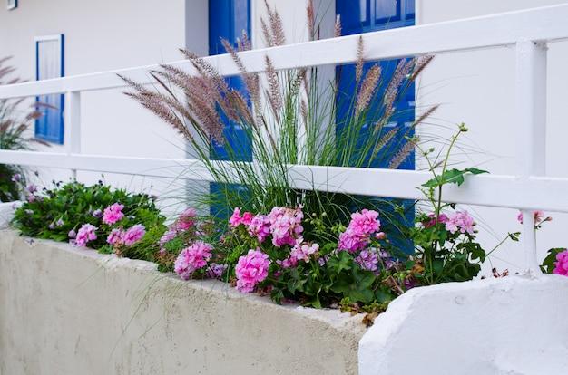 トルコの白い家の近くのpennisetum setaceumとpelargonium zonale。
