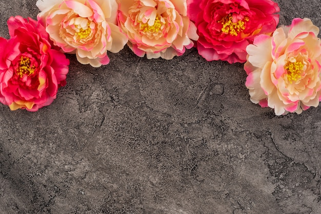 Peonies on bright gray concrete background with copy space.